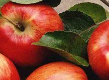 10 Manfaat dan Khasiat Apel Untuk Kesehatan dan Nilai Gizinya