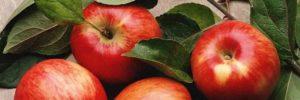 10 Khasiat Jus Apel Untuk Kesehatan dan Nilai Gizinya