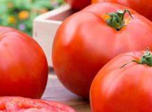 11 Manfaat dan Khasiat Tomat Untuk Kesehatan Dan Nilai Gizinya