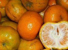 10 Khasiat dan Manfaat Jeruk Untuk Kesehatan - Khasiat Sehat