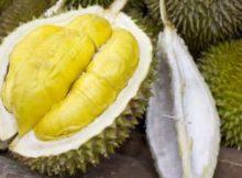 10 Khasiat dan Manfaat Durian Untuk Kesehatan - Khasiat Sehat