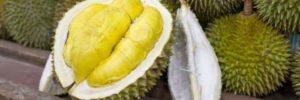 10 Khasiat Durian Untuk Kesehatan