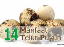14 Manfaat Telur Puyuh untuk Kesehatan - Khasiat Sehat