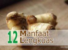12 Manfaat Lengkuas untuk Kesehatan - Khasiat Sehat