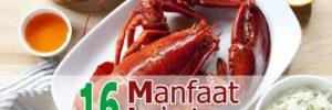 16 Khasiat Lobster untuk Kesehatan