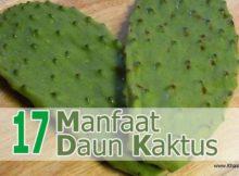 17 Manfaat Daun Kaktus untuk Kesehatan - Khasiat Sehat