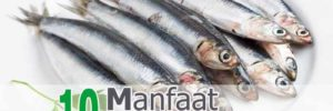 10 Khasiat Ikan Sarden untuk Kesehatan