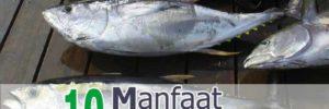 10 Khasiat Ikan Tuna untuk Kesehatan