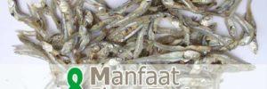 8 Khasiat Ikan Teri untuk Kesehatan