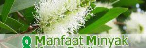 8 Khasiat Minyak Kayu Putih untuk Kesehatan