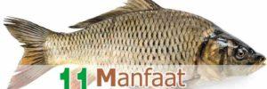 11 Khasiat Ikan Mas untuk Kesehatan