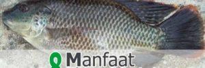 8 Khasiat Ikan Mujair untuk Kesehatan