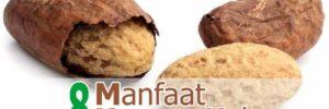 8 Khasiat Kacang Kola untuk Kesehatan