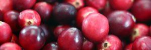 8 Khasiat Buah Cranberry untuk Kesehatan