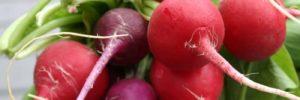12 Manfaat Lobak Merah untuk Kesehatan